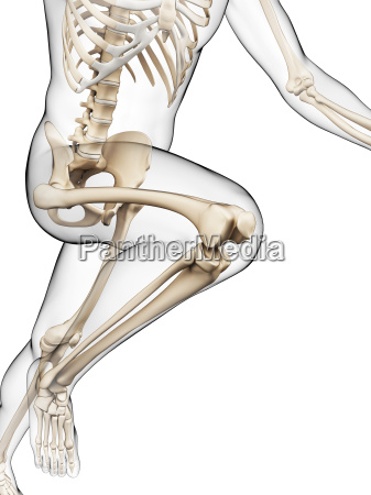 3d rendered illustration runner anatomy