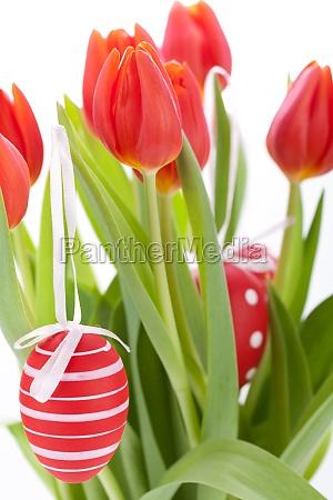 dekorative rote tulpen saison blumen zu
