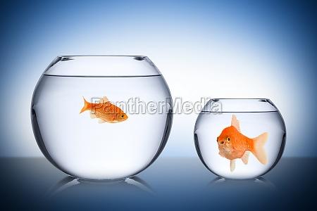 fish social envy concept