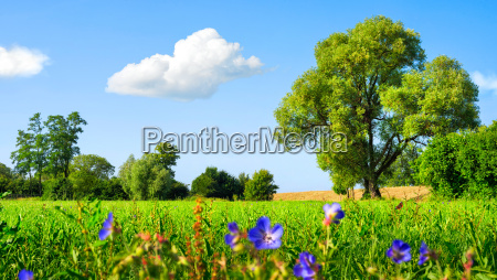idyllic meadow landscape with blue skies