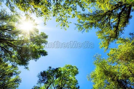 treetops frame the sunny sky