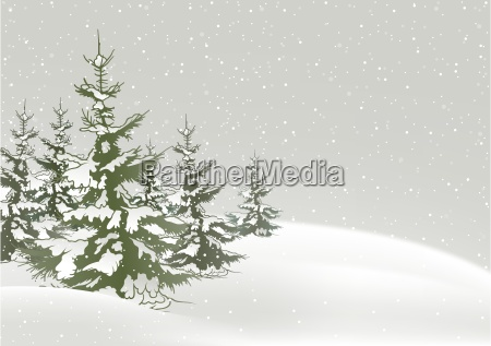 snow and conifers
