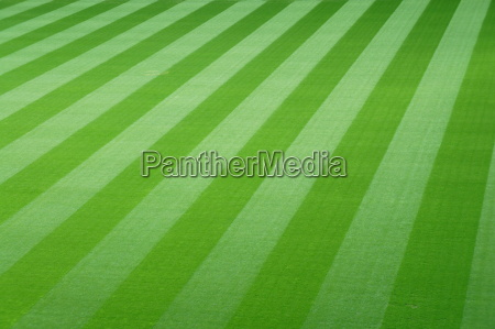 fussballfeld mit gruenem rasen