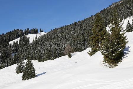 wald in den bergen mit schnee