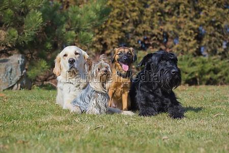 eine gruppe von vier hunden verschiedener
