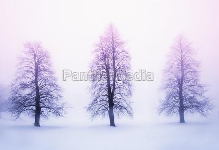 winterbaeume im nebel bei sonnenaufgang