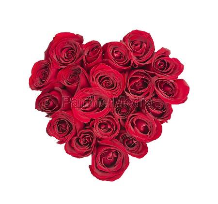 rose herz