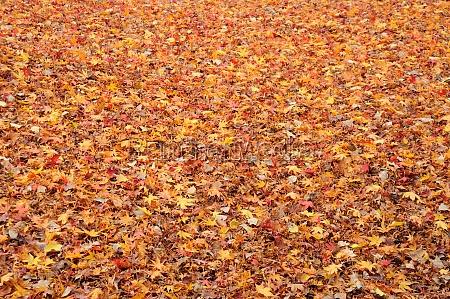 blatt baumblatt park hintergruende natur herbst