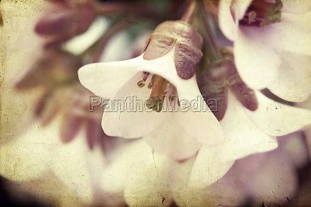 vintage background of spring blossom