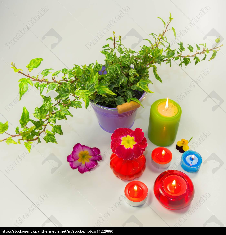 frühling, mit, efeu, , blüten, und, kerzen - 11229880