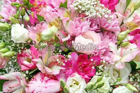 colorful background of flowers