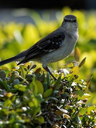 tier vogel wildlife