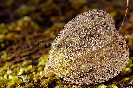 filigree plans on moss