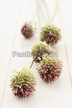 food aliment inside indoor photo flower