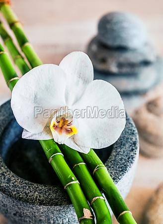 schoene orchidee und bambussprossen