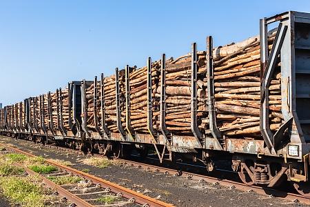 holz logging zug