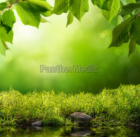 green nature as background
