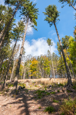 forest of beskid mountains in poland