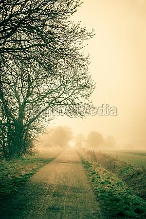 misty road am fruehen morgen