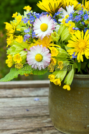 flower cowslips primroses forgetmenot myosotis sylvatica