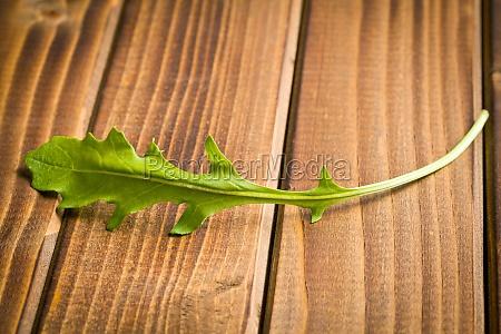 frisches rucolablatt