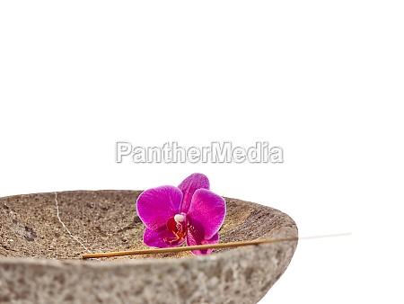 schale bluete rosa orchidee