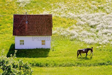 weg zur pferdekoppel ueber eine fruehlingswiese