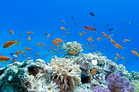 korallenriff mit hart und weichkorallen mit