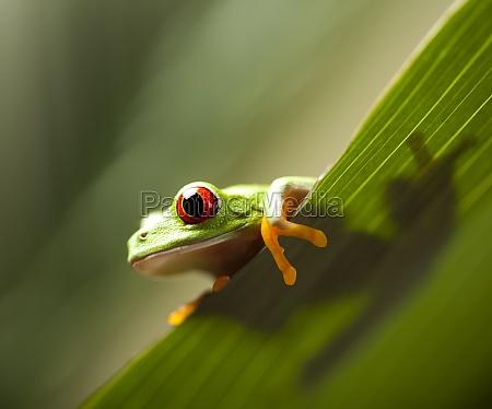 frosch auf dem blatt