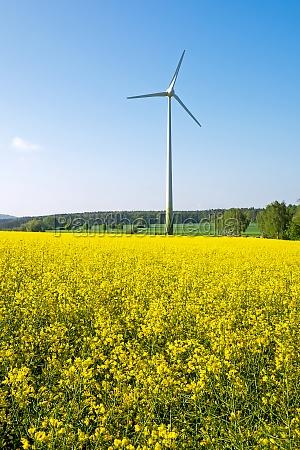 wind turbine behind a rapeseed field