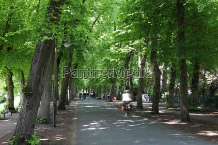 bicycle riders in a city park