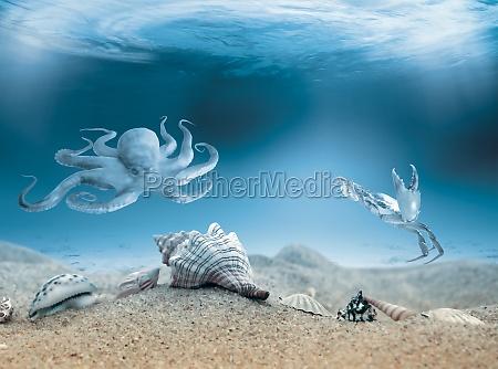 blau tier wild fisch muschel sonnenlicht