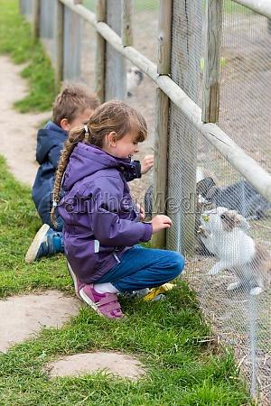 zwei kinder fuetterung kaninchen