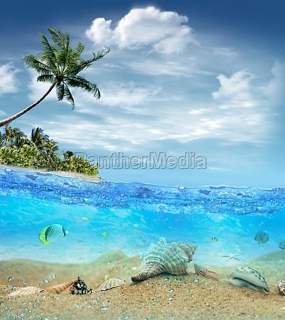 unterwasserleben nahe dem strand der tropischen