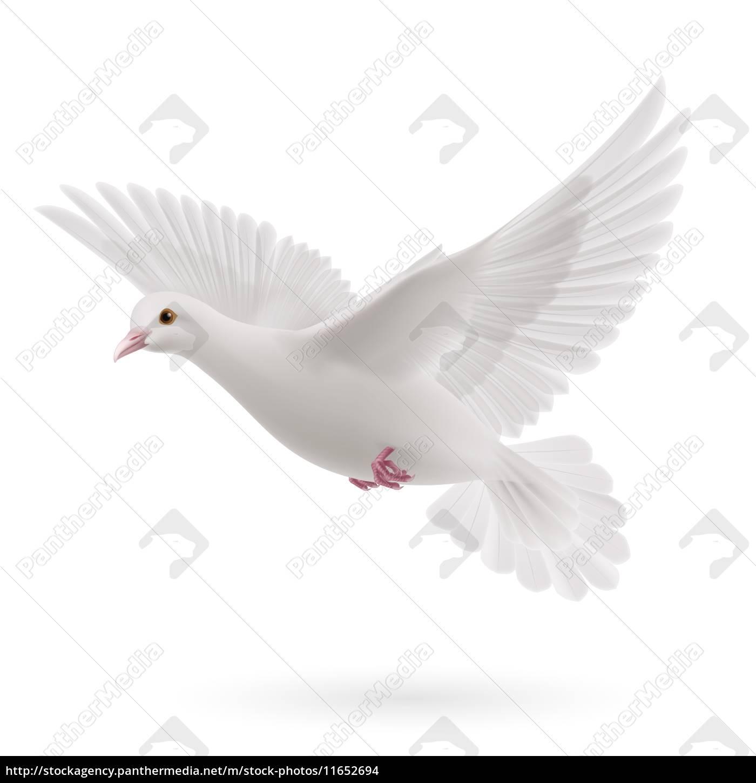 dove_white - 11652694