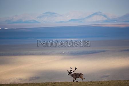 fahrt reisen horizont tier saeugetier nationalpark