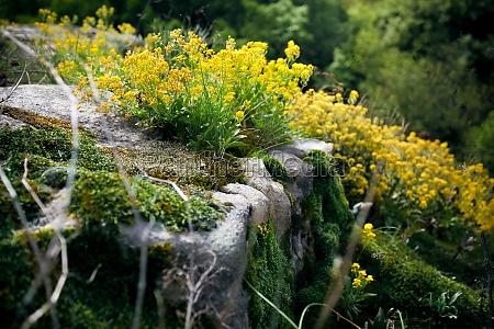 blume pflanze gewaechs tourismus outdoor freiluft
