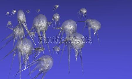 jellyfish plage seabed