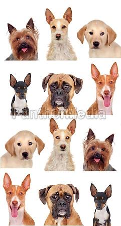 foto collage aus verschiedenen rassen von