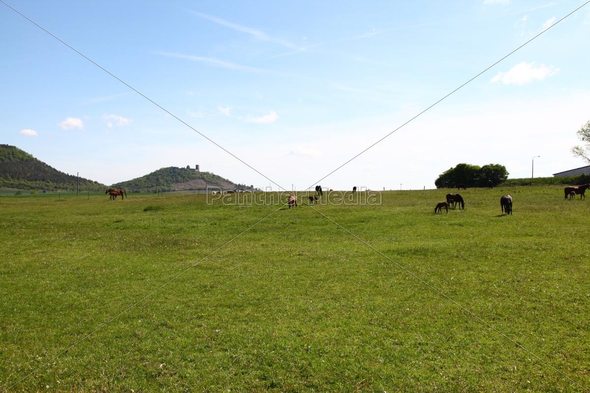 Landschaft, Pferde, Fohlen, Koppel, Pferdekoppel, Grün - 11700418