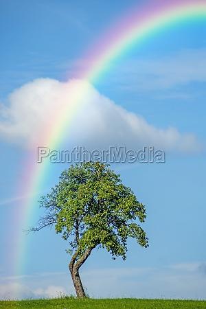 arbol con el arco iris