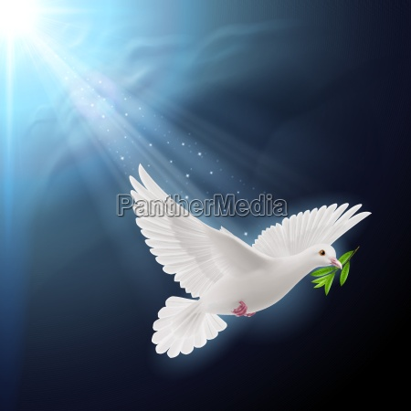 fly dove in sunlight
