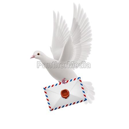 dove, weiß - 11745623