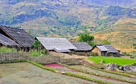 sapa reis terrassenfelder vietnam