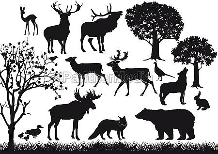 wald und wildtiere