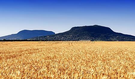 landwirtschaft ackerbau feld sommer sommerlich lese