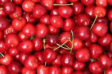 rote reife kirschen bilden einen hintergrund