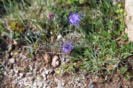 Blume, Pflanze, Pflanzen, Blumen, Umwelt, Natur - 11855637