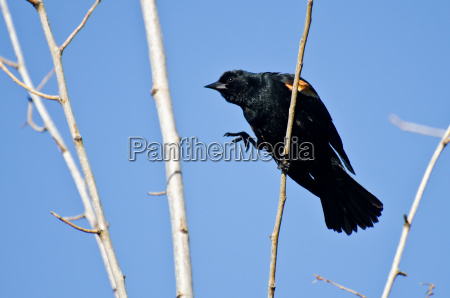 baum tier vogel wild schwarze schwarz