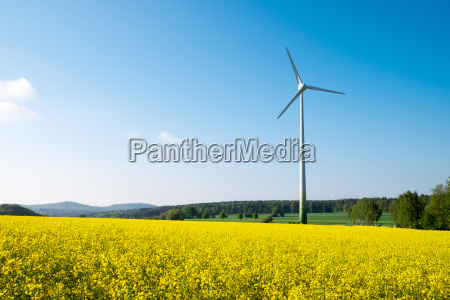 blue sky yellow rapeseed and wind